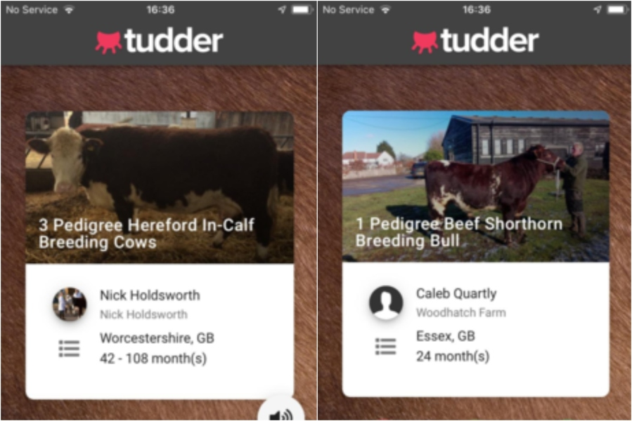 Bovine Tinder to Help Farmers with Breeding Stock