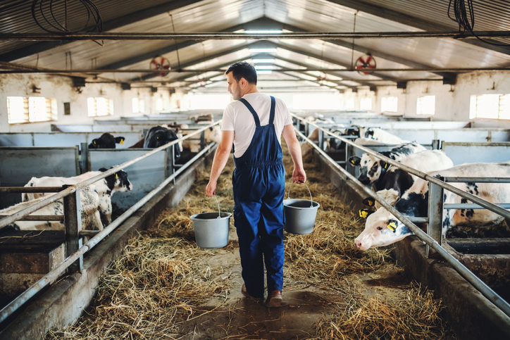 Coronavirus Support for Welsh Dairy Farmers